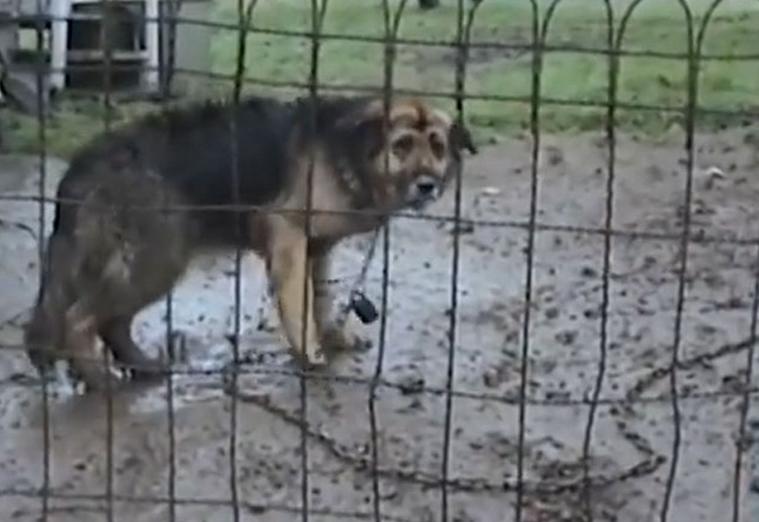 El feliz rescate de un perro después de vivir 10 años atado a una cadena