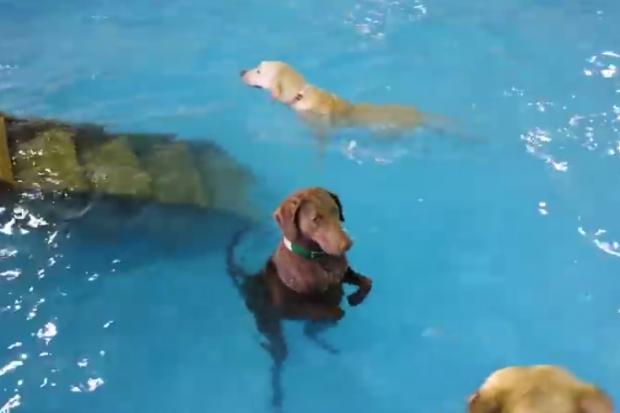 El perro al que le gusta el agua pero no sabe nadar