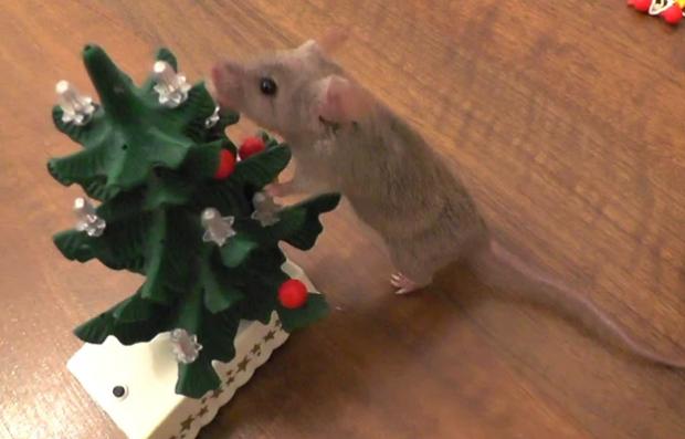 El ratón con más espíritu navideño del mundo