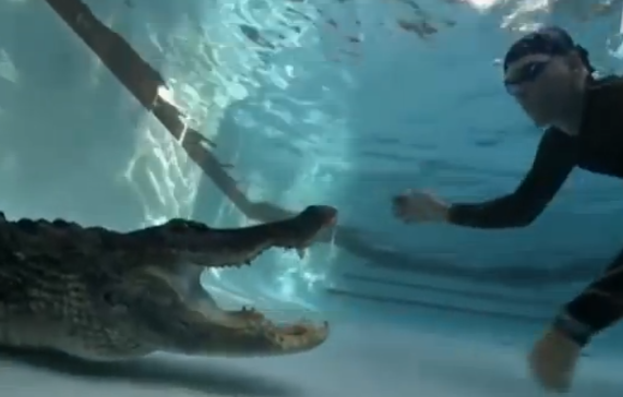 ¿Cómo sacarías un caimán de una piscina?