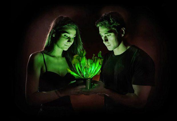 Starlight Avatar: La primera planta bioluminiscente del mundo
