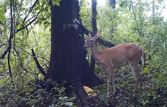 ¿Qué hace Bambi cuando no lo ve nadie?