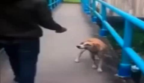 Un estudiante lanza de una patada a un perro desde un puente