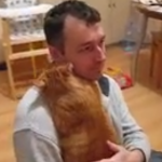 Los gatos también dan abrazos