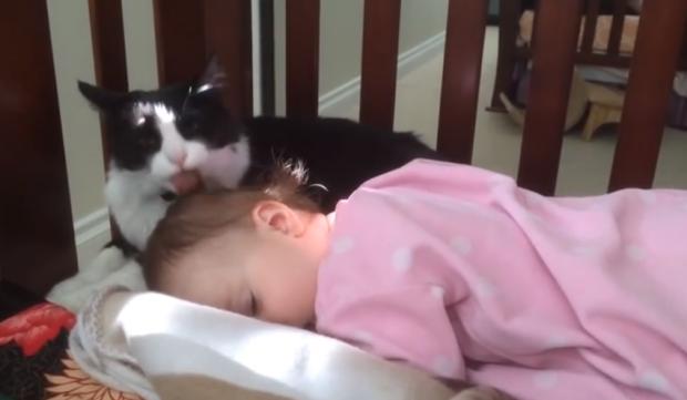 Gato limpiando la cabeza de la niña pequeña