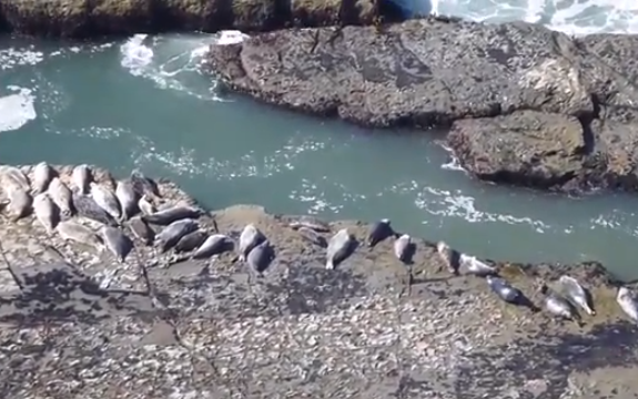 Trolleando a las focas que tan a gusto estaban descansando al sol