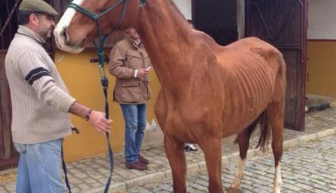 Sale a la luz el estado de desnutrición de los caballos de José María Gil Silgado, novio de la ex Miss España María Jesús Ruiz