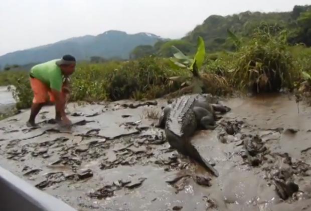 Jugándosela dando de comer a un cocodrilo