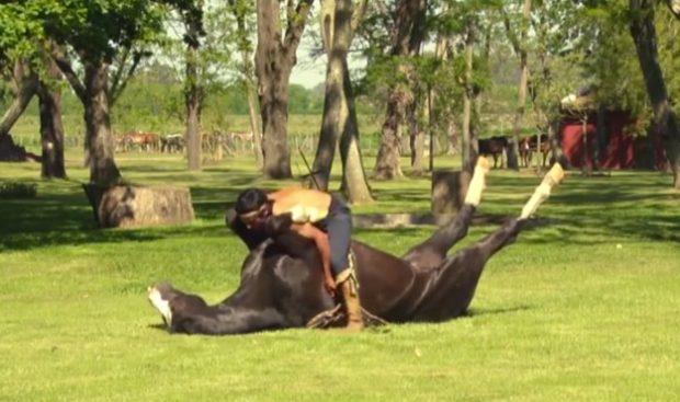 Doma india, caballo amansado sin ningún tipo de castigo físico