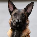 Snuffles, el perro que tiene dos hocicos y nadie quería, es adoptado