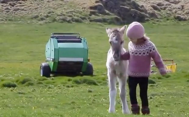 Un potro rescatado entabla una insólita amistad con una niña