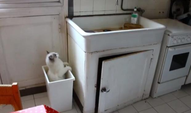 El gato que no entiende que no puede subirse a un cubo vacío para subir al fregadero