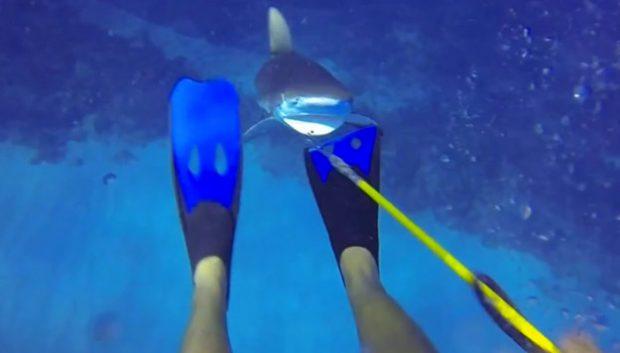 Un tiburón le ataca mientras que está cazando peces león en las Islas Caimán (Vídeo)