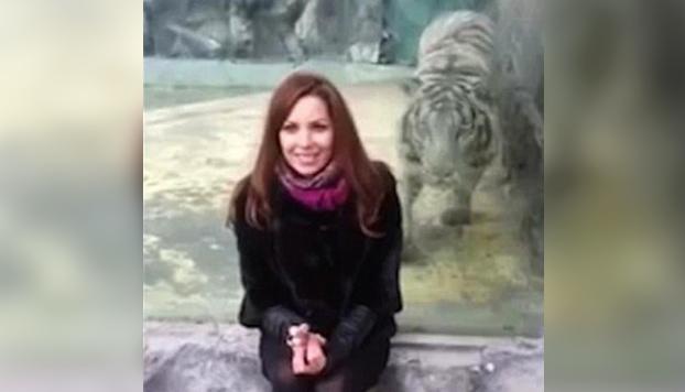 Una mujer provoca que un enorme tigre blanco le ataque (Vídeo)