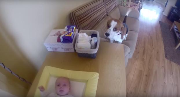 Este perro ayuda a una mamá a cambiar los pañales a su bebé