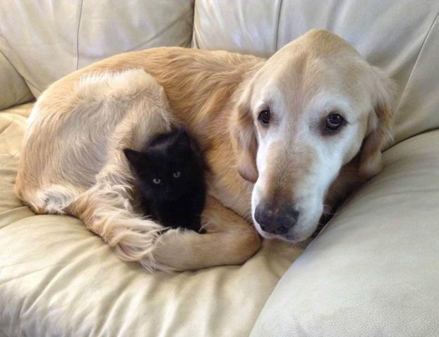 perro-pierde-companero-gato-3