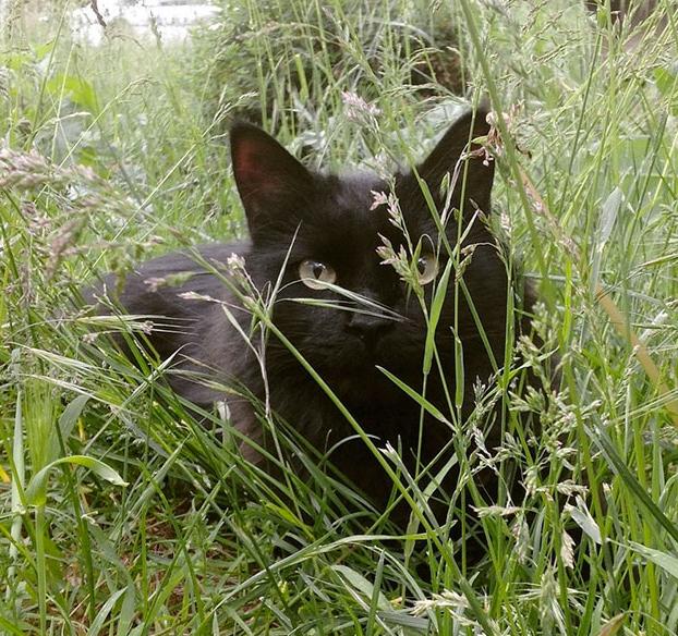 perro-pierde-companero-gato-5