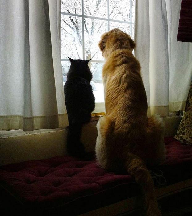 perro-pierde-companero-gato-6