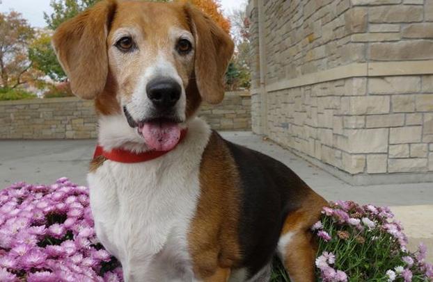 transformacion-beagle-kale-8