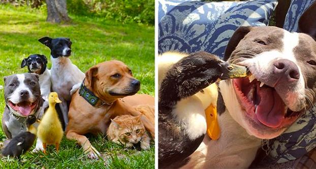 Esta pareja rescató a 7 animales y así es como viven ahora