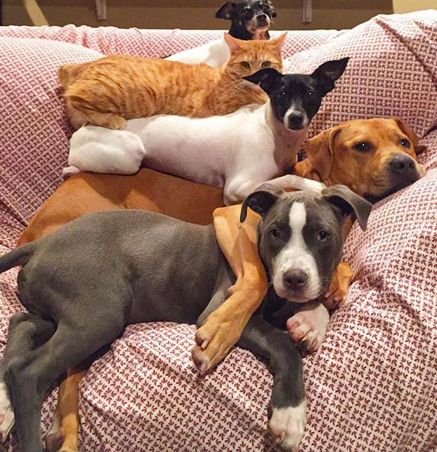 7-animales-rescatados-6