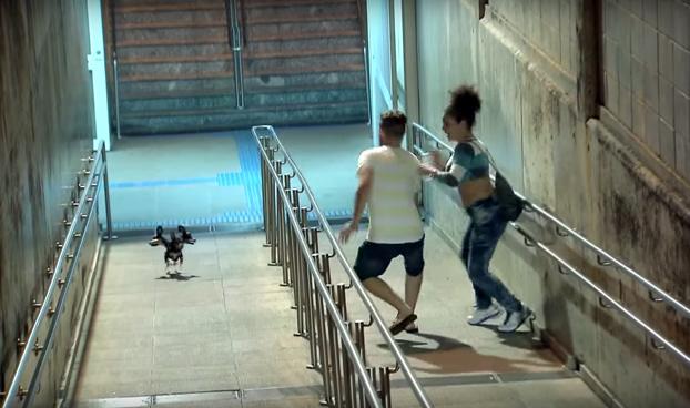 Entran en pánico al encontrarse con un perro de tres cabezas que corre directamente hacia ellos