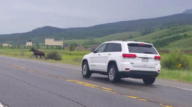 Un coche embiste un alce que intentaba cruzar la carretera y este sale volando por los aires