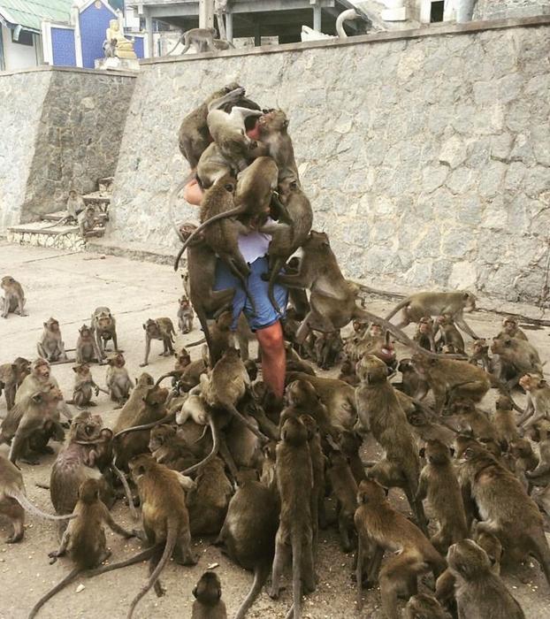 Este es el motivo por el que no deberías dar de comer a un mono...