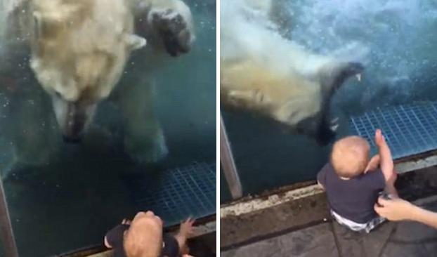 Momento en el que un oso polar intenta comerse a un bebé en un zoo (Vídeo)