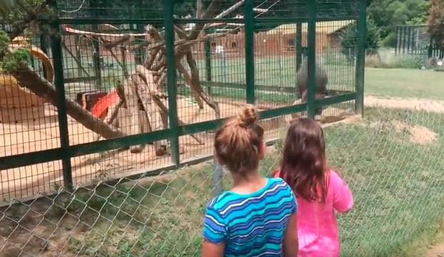 No le toques los cojones al babuino