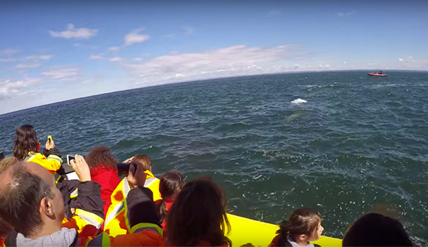 Estos turistas pasan un momento de tensión al pasarle una enorme ballena azul bajo su barco