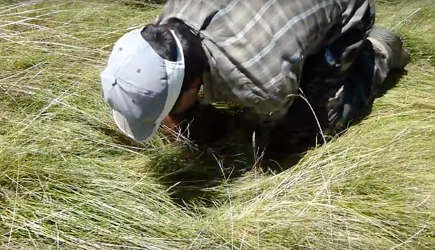 ''Y así es como nace una oveja'': Un ganadero zamorano encuentra una en un agujero