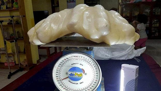 perla-gigante-34-kg