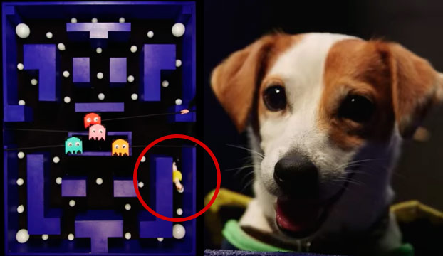 Este perro es todo un 'Dios' jugando al Pac-Man