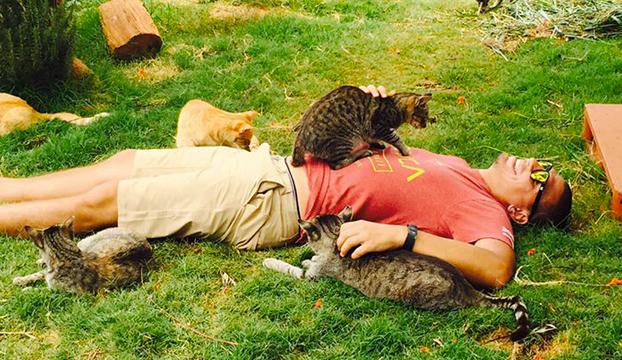 Gente de todo el mundo llega a este santuario gatuno de Hawai para mimar a sus 500 gatos
