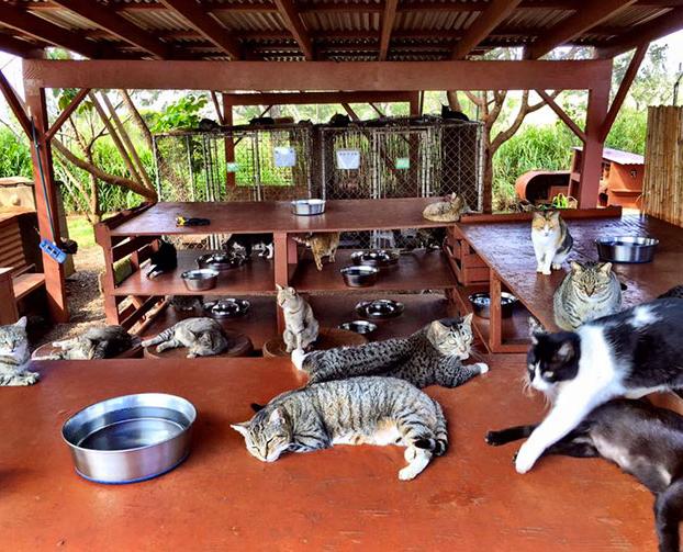 santuario-gatos-hawai-3