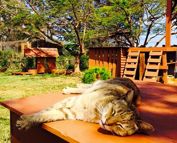 santuario-gatos-hawai-4