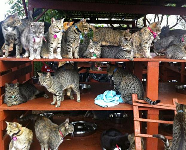 santuario-gatos-hawai-6