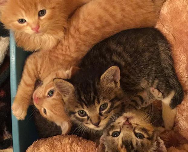 santuario-gatos-hawai-8