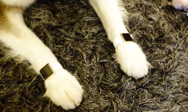 coco-perro-magnate-chino-8-iphone-7-4