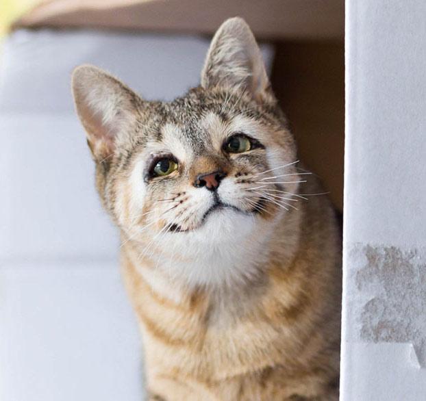 gatos-callejeros-sin-parpados-2