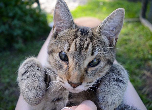 gatos-callejeros-sin-parpados-6