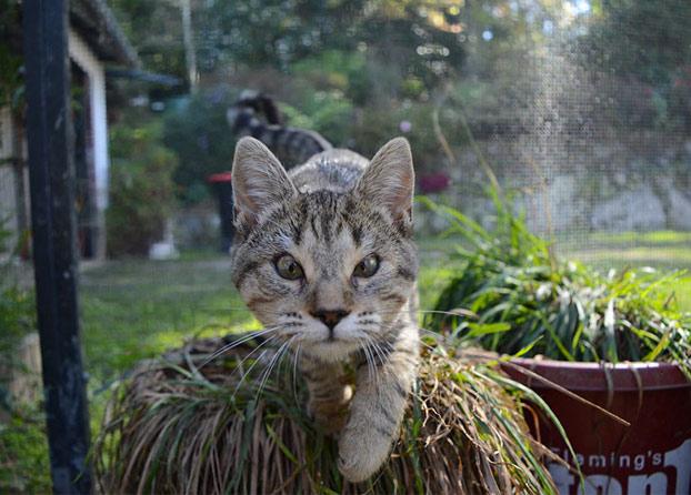 gatos-callejeros-sin-parpados-7