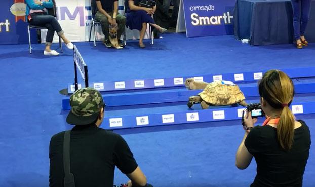 Una carrera entre dos grandes contrincantes: Conejo vs tortuga