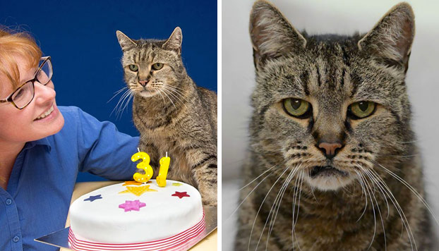 Nutmeg, el gato más viejo del mundo, celebra su 31 cumpleaños