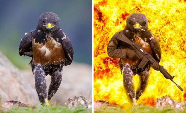 Este halcón desata la más intensa batalla de Photoshop hasta la fecha