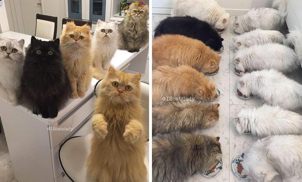 mujer-12-gatos-persas-1
