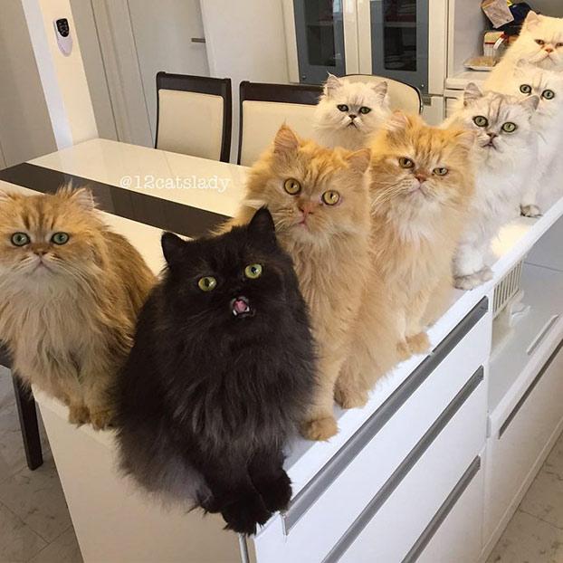 mujer-12-gatos-persas-2