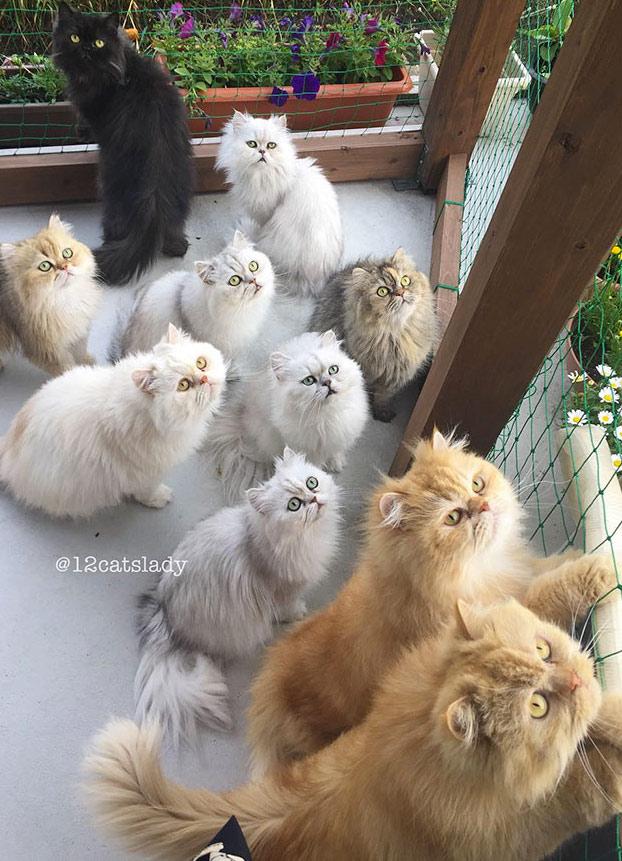 mujer-12-gatos-persas-7