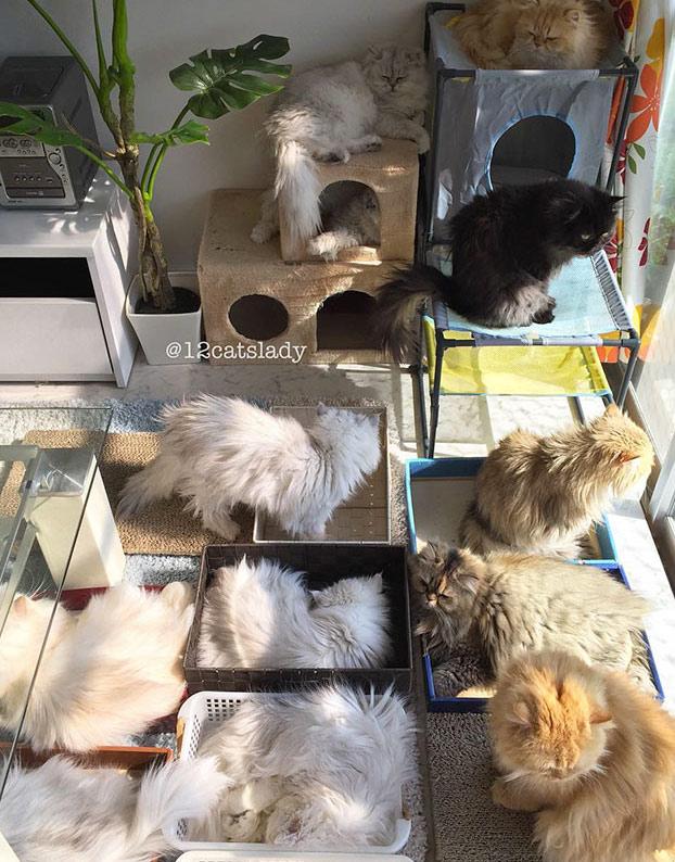 mujer-12-gatos-persas-8